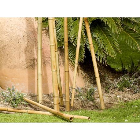Tutor bambú decoración 1,80 m - ø 3540 mm BAMBOO DECO Nortene